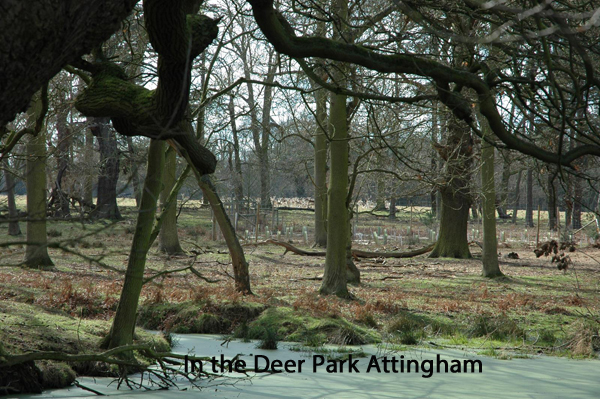 InDeerParkAttingham.jpg